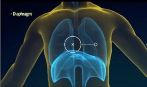 How to Sing-Breath with Diaphragm the muscle just below the lungs